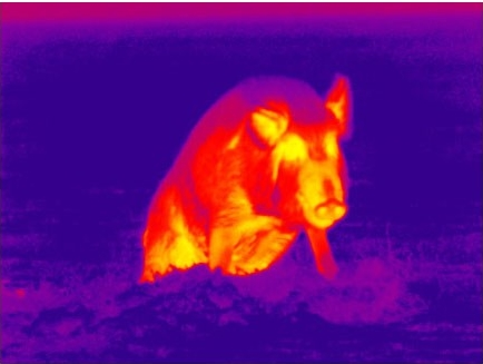 color thermal image